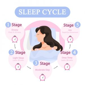 Fases del sueño_ciclos